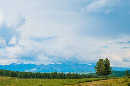 Spectacular view of mountain scenery. Amazing landscape with footpath and coniferous trees in highland. Distant giant rocky mountains under cloudy sky. Wonderful scenic green mountainscape. Two cedars 版權商用圖片