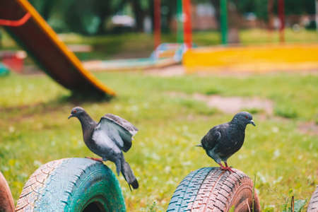 Two gray pigeons is on fence on colorful playground in sunny day. City birds of close-up. Gray-black flying animals on fencing. Pigeons on green grass bright background on game area with copy space. 版權商用圖片