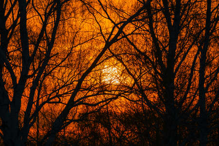 Sun shines through branches of trees. Warm abstract atmospheric image of sunlight behind branches. Background of trees with branches in shape of triangle with orange backlight. Standard-Bild - 122912596