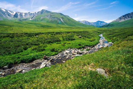 Mountain creek in green valley among rich vegetation of highland in sunny day. Fast water flow from glacier under blue clear sky. Giant mountains with snow. Vivid landscape of majestic Altai nature. Standard-Bild - 124054170