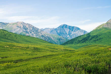Giant mountains with snow above green valley with meadow and forest in sunny day. Rich vegetation of highlands in sunlight. Amazing mountain landscape of majestic nature. Standard-Bild - 124054105