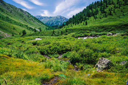 Mountain creek in green valley among rich vegetation of highland in sunny day. Fast water flow from glacier under blue clear sky. Giant snowy mountains behind hill. Vivid landscape of majestic nature. Standard-Bild - 124054108