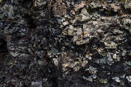 Plane of dark gray boulder. Beautiful rough rock surface close up. Colorful textured stone. Amazing detailed background of highlands boulder with mosses and lichens. Natural texture of mountain stone. Standard-Bild - 124054178