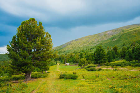 Footpath near old cedar. Country house in highlands. Coniferous trees near huge mountain. Giant green mountains. Colorful scenic mountainous landscape. Picturesque scenery. Wonderful mountainscape. Standard-Bild - 124054177