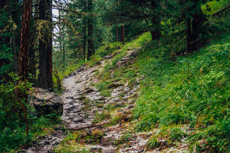 Hailstone on trail in dark coniferous forest. Atmospheric woodland landscape with rich forest flora. Hail in woods. Path in highlands. Rise on mountain through woodland. Way up in dark conifer forest. Standard-Bild - 124054262
