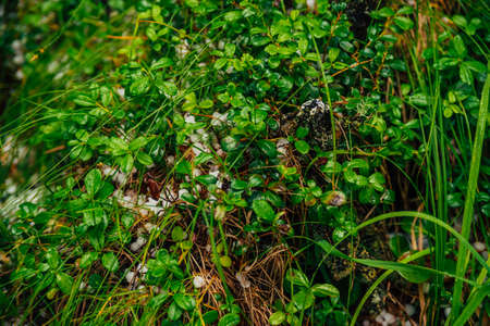 Hailstones on ground among rich vegetation in macro. Big hailing on plants close-up. Natural background of hail with greenery. Hailstorm dropping among grasses. Abnormal precipitation. Amazing weather Standard-Bild - 124054181