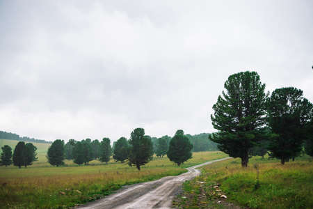 Dirt road in highlands among conifer trees in overcast weather. Gloomy cloudy sky above coniferous forest in mountains. Atmospheric mountain landscape with cedars. Unimaginable nature of Altai. Standard-Bild - 124054185