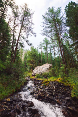 Wonderful fast water stream in wild mountain creek. Amazing scenic green forest landscape. Rich vegetation and big stone near brook. Atmospheric scenery of highlands. Beautiful mountains nature. Standard-Bild - 124054370