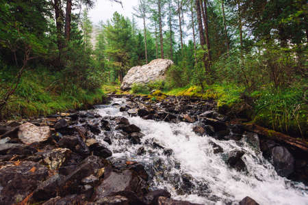 Wonderful fast water stream in wild mountain creek. Amazing scenic green forest landscape. Rich vegetation and big stone near brook. Atmospheric scenery of highlands. Beautiful mountains nature. Standard-Bild - 124054371