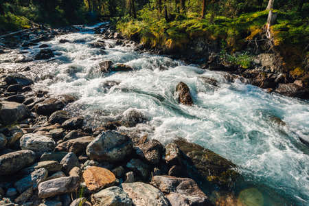 Beautiful vegetation near mountain creek in sunlight. Big boulders in fast water stream close-up. Background of rapids of river in sunny day. Fast flow near wet stones. Rich flora of highlands. Standard-Bild - 124054372