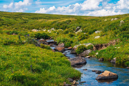 Spring water stream in green valley in sunny day. Rich highland flora. Amazing mountainous vegetation near mountain creek. Wonderful paradise scenic landscape. Paradisiacal sunny picturesque scenery. Standard-Bild - 124054377