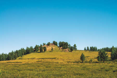 Cedars grows on hill near rocky stone in sunny day. Amazing coniferous trees under blue sky. Rich vegetation of highlands. Unimaginable mountain landscape. 写真素材 - 125153903