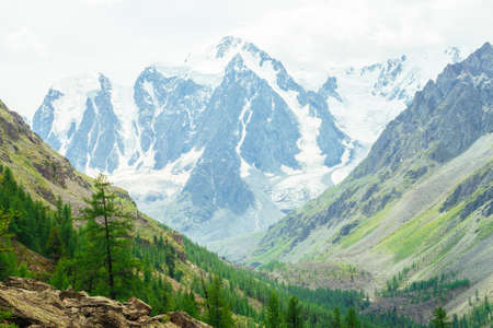 Larch tree on stony hill on background of glacier. Wonderful snowy mountains. Snow on mountain range. Rocky ridge in mist. Conifer forest. Amazing Vivid green landscape of majestic nature of highlands Standard-Bild - 125153837