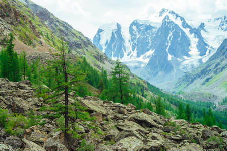 View on wonderful glacier behind giant mountains. Huge amazing snowy mountain range. Coniferous trees on stones. Conifer forest on mountainside. Atmospheric landscape of majestic nature of highlands. Standard-Bild - 125153838