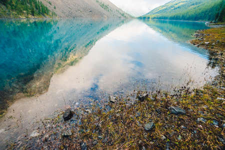 Plants and stones on bottom and edge of mountain lake with clean water close-up. Giant mountains reflected on smooth water surface. Background with underwater vegetation. Reflection of mountainside.