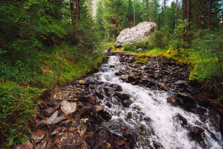Wonderful fast water stream in wild mountain creek. Amazing scenic green forest landscape. Rich vegetation and big stone near brook. Atmospheric scenery of highlands. Beautiful mountains nature. 写真素材 - 125153858