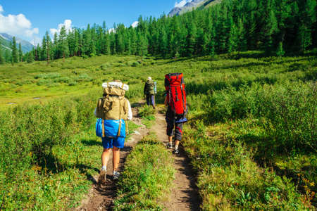 Travelers with large backpacks go to forward on footpath across green meadow along hill with conifer forest. Hiking in mountains. Tourists near conifer trees on summit. Majestic nature of highlands. 写真素材 - 125153861