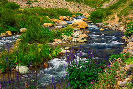 Group beautiful purple and pink flowers and rich vegetations grows near mountain creek. Fast water stream of creek among stones in bright sunlight. Amazing green landscape of unusual Altai nature. 写真素材 - 125153865