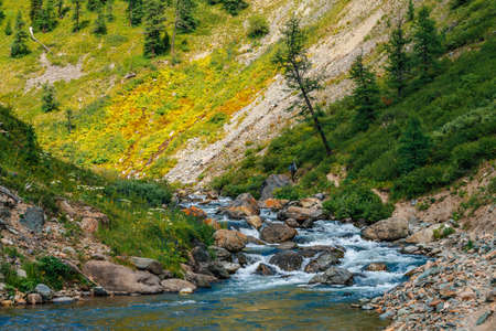 Mountain creek in green valley in sunny day. Fast water stream. Rich highland flora and coniferous trees on mountainside. Amazing mountainous vegetation. Wonderful scenic landscape. Colorful scenery. 写真素材 - 125153868