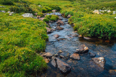 Spring water stream in green valley in sunny day. Rich highland flora. Amazing mountainous vegetation near mountain creek. Wonderful paradise scenic landscape. Paradisiacal sunny picturesque scenery. 写真素材 - 125153870