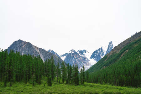 Snowy mountain top behind hill with forest under cloudy sky. Rocky ridge in overcast weather. White snow on glacier. Atmospheric landscape of majestic nature.