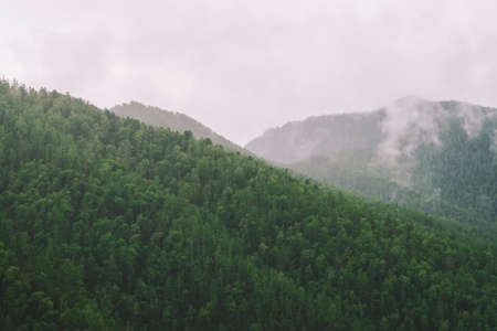 Evergreen forest cover in highlands in morning fog. Mystic haze among hills. Atmospheric misty mountain landscape of majestic nature.