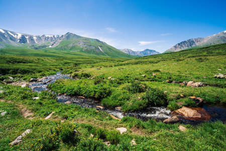 Mountain creek in green valley among rich vegetation of highland in sunny day. Big boulder in fast water from glacier under blue clear sky. Giant mountains with snow. Vivid landscape of Altai nature.