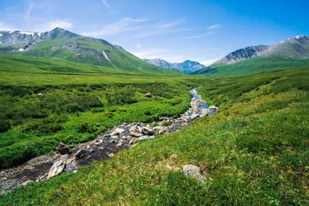 Mountain creek in green valley among rich vegetation of highland in sunny day. Fast water flow from glacier under blue clear sky. Giant mountains with snow. Vivid landscape of majestic Altai nature.