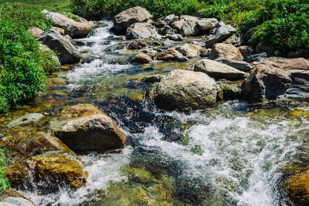 Mountain creek with big boulders near green meadow in sunny day. Clean water stream in fast brook in sunlight. Amazing landscape of Altai nature.