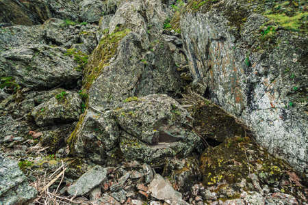 Detailed texture of rock with mosses and lichens close up. Natural background of rocky wall with copy space. Mountain vegetation on steep slope. Plants on mountainside. Beautiful textured cliff.