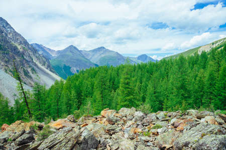 Coniferous trees in highlands. Larch trees on stony hill. Wonderful giant rocky mountains. Mountain range. Huge rocks. Mountain flora. Conifer forest. Amazing vivid green landscape of majestic nature.