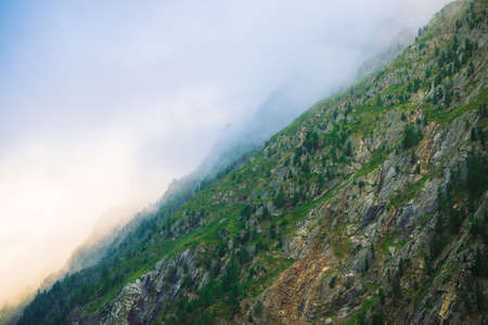 Diagonal mountainside with forest in morning fog close up. Giant mountain in haze. Early sun is shining through mist. Overcast weather above rocks. Atmospheric mountain landscape of majestic nature. 写真素材