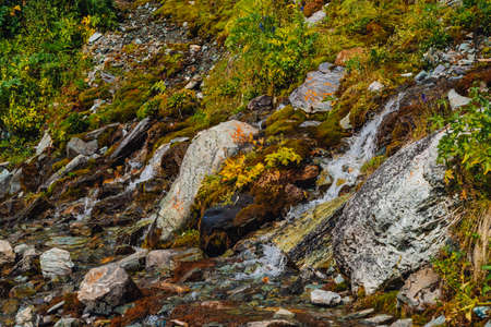 Rich flora of highlands. Red and green mosses, colorful plants, lichens, small waterfall from rock. Spring water on mountainside. Amazing natural background with beautiful vegetation of mountains. 写真素材