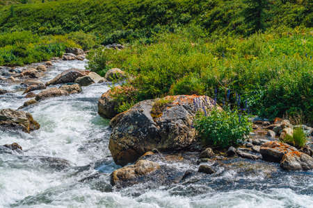 Beautiful vegetation near mountain creek in sunlight. Big boulders in fast water stream close-up. Background of rapids of river in sunny day. Fast flow near wet stones. Rich flora of highlands. 写真素材