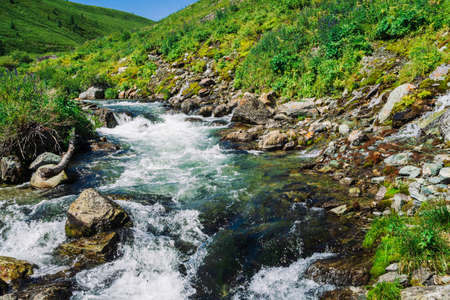 Fast water stream of mountain creek among boulders in bright sunlight in valley. Vivid green grass, purple flowers, rich vegetation in highlands. Amazing colorful landscape of majestic Altai nature. 写真素材