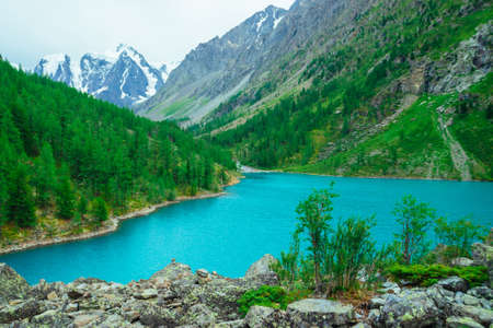 Green bush on stony hill on background of glacier and mountain lake. Coniferous forest on mountainside. Rich vegetation of highlands. Mountainous flora. Amazing vivid landscape of majestic nature. 写真素材
