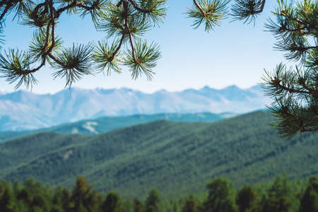 Blurred view of giant mountains and glaciers through conifer branches. Snowy ridge under blue clear sky in bokeh. Snow summit in highlands. Amazing atmospheric minimalist mountain landscape.