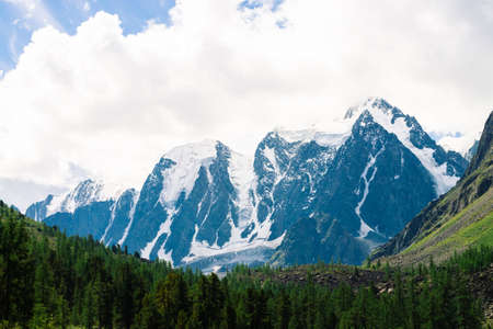 Amazing huge glacier behind conifer forest. Snowy mountain range in cloudy sky. Wonderful giant rocky ridge with snow. Atmospheric landscape of majestic nature of highlands. Breathtaking mountainscape