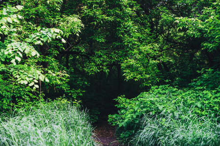 Scenic natural green background of lush thickets in sunlight. Beautiful bushes with colorful leaves close-up. Vivid backdrop of rich greenery in sunny day with copy space. Trail in forest. Way in park