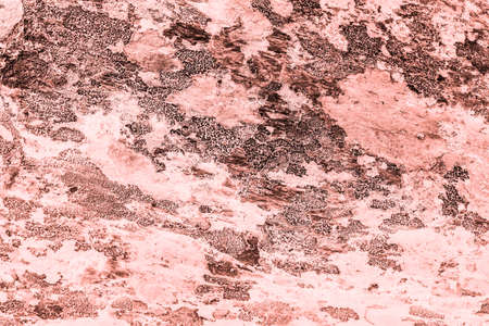 Vintage pink background. Rough painted wall of living coral color. Imperfect plane of beige colored. Uneven old decorative toned backdrop of beige tint. Texture of pink hue. Ornamental stony surface. Фото со стока