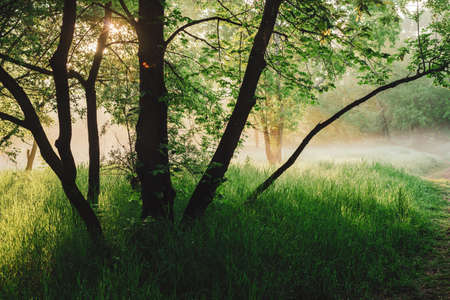 Scenic sunny green landscape of sunrise. Mist among trees on meadow in park in early morning. Colorful scenery. Green grass on glade. Sunbeams and lens flare. Bright sun through lush foliage on sunset Banco de Imagens