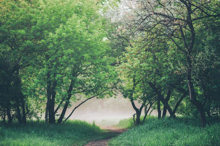 Atmospheric landscape with beautiful lush green foliage. Footpath under trees in park in early morning in mist. Pathway among green grass and leafage in faded tones. Toned green background of nature.