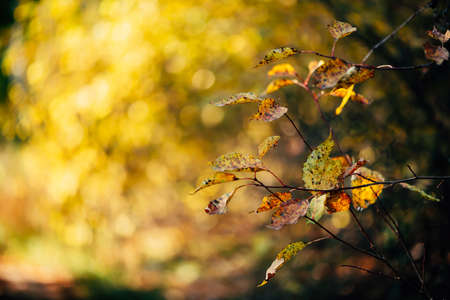Orange autumn leaves on yellow swirling bokeh background in sunset. Scenic autumn rich flora in golden hour. Colorful foliage in sunrise. Natural multicolor plants in sunlight. Fall nature backdrop.