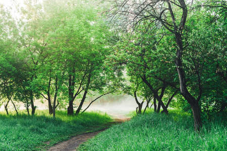 Scenic landscape with beautiful lush green foliage. Footpath under trees in park in early morning in mist. Colorful scenery with pathway among green grass and leafage. Vivid natural green background.