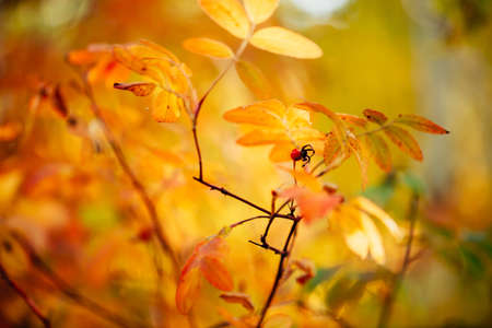 Red berry of dog rose on branch in sunset. Scenic autumn rich flora in golden hour. Colorful briar leaves in sunrise. Multicolor bokeh plants nature background in sunlight. Sunny fall natural backdrop 写真素材