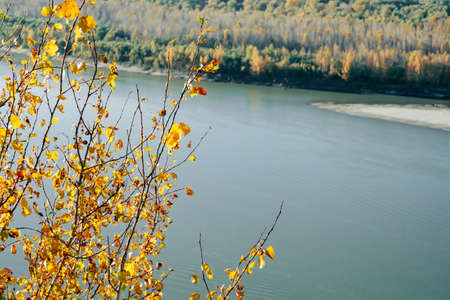 Orange yellow golden autumn leaves on blue water background. Scenic autumn rich flora. Colorful foliage in sunny light. Natural multicolor leafage plants on river backdrop in sunlight. Fall nature.