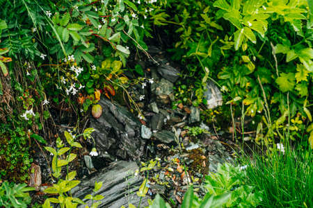 Scenic background with wet stones among lush grasses and many small beautiful flowers. Mountain creek on rock with thick fresh greenery. Droplets on grass. Colorful backdrop of rich alpine flora. Stock fotó