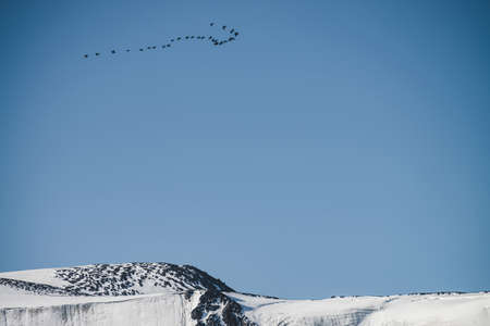 Flock of birds in blue sky fly over snowy mountain ridge. Beautiful scenic landscape with silhouettes of migratory birds above glacier. Bird flock above rocks with snow. Wonderful minimalist scenery. Stock Photo