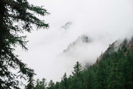 Ghostly view through branches and dense fog to beautiful rockies. Low clouds among huge rocky mountains with trees. Alpine atmospheric landscape to big cliff in cloudy sky. Minimalist highland scenery