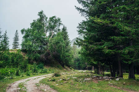 Atmospheric green forest landscape with dirt road among firs in mountains. Scenery with dirt road on rocks and stones through mountain coniferous forest. View to conifer trees in mountain woodland. 스톡 콘텐츠